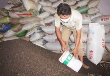 Việt Nam: Xuất khẩu hồ tiêu tháng 08/2021 sụt giảm vì tác động tiêu cực của dịch bệnh covid-19