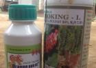 Hai loại thuốc trộn gây ra hiện tượng rụng lá