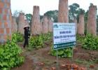 Mô hình trồng tiêu trên trụ gạch ở xã Cam Chính, huyện Cam Lộ, Quảng Trị