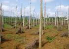Nhiều diện tích đất được chuyển đổi để trồng cây hồ tiêu