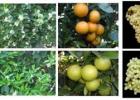 So sánh hiệu quả sử dụng chất GA trong sản xuất nông nghiệp