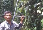Nhà nông Trịnh Văn Ba bên vườn tiêu ở thị trấn Ea K'Nốp, huyện Ea Kar.