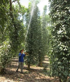 Pha trộn các loại thuốc bảo vệ thực vật