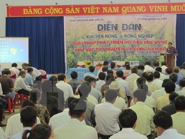 Hội nghị phát triển hồ tiêu bền vững (TTXVN)