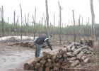 Gia đình ông Lại Quốc Huy ở buôn Tơng Lía, xã Ea Tar (huyện Cư M'gar) đã chặt bỏ vườn cao su để trồng tiêu.