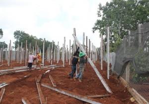 Nông dân Đắc Lắc đang tất bật dựng trụ để trồng hồ tiêu.
