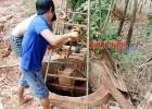Người trồng tiêu nổ lực đào giếng chống hạn
